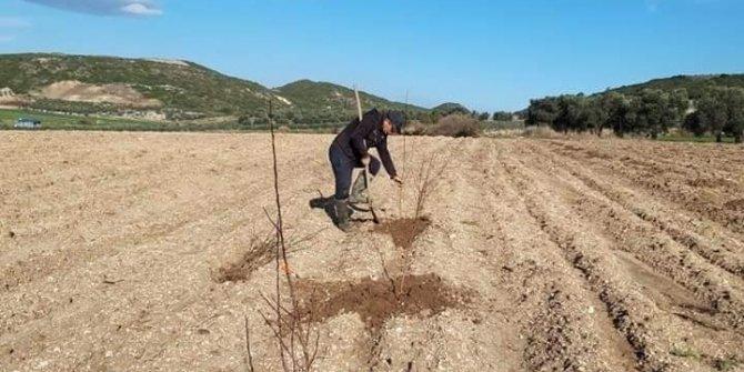 Didim'de erkenci kayısı fidanları toprakla buluştu