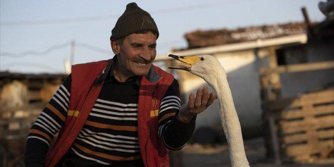 Mektup götürdüğü köyde bulduğu kuğu ile postacının 'garip' dostluğu 37 yıldır sürüyor