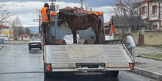Sahipsiz Ata Akşehir Belediyesi sahip çıktı