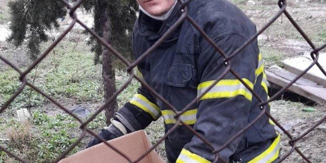 Burdur'da ısınmak için rögara giren yavru köpekler kurtarıldı