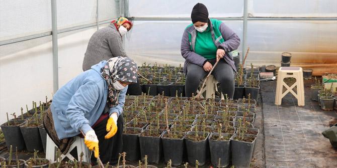 Beyşehir Belediyesi fide ve çiçek üretimini kendi seralarında gerçekleştiriyor