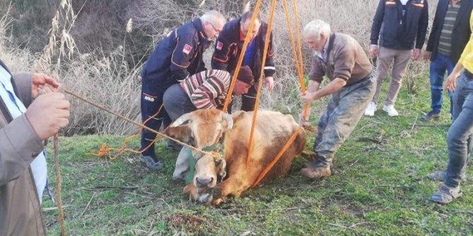 Dereye düşen inek kurtarıldı