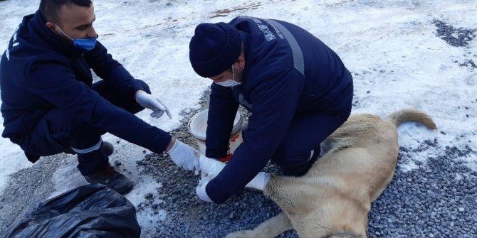 Aracın çarptığı köpeğe müdahale
