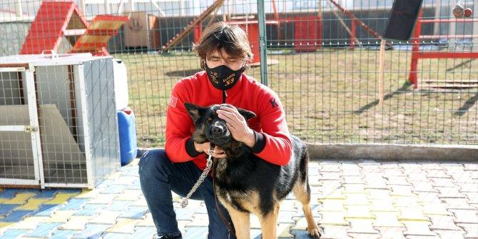 """Duyarlı köpek eğitmeni, afetlerde görev yapacak """"hassas burunları"""" gönüllü yetiştiriyor"""