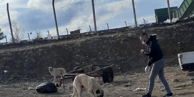 Kulu'da fedakar üniversiteli sokak hayvanlarını besliyor