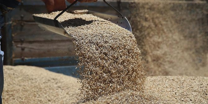 TMO, gıda fiyatlarındaki artışla mücadele için besicilere uygun fiyatlı yem satıyor