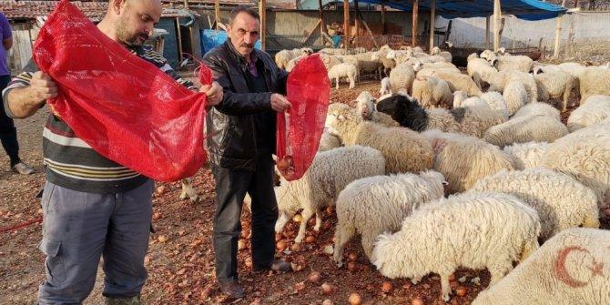 Fiyatıyla gündem olmuştu, şimdi koyunlara yediriliyor