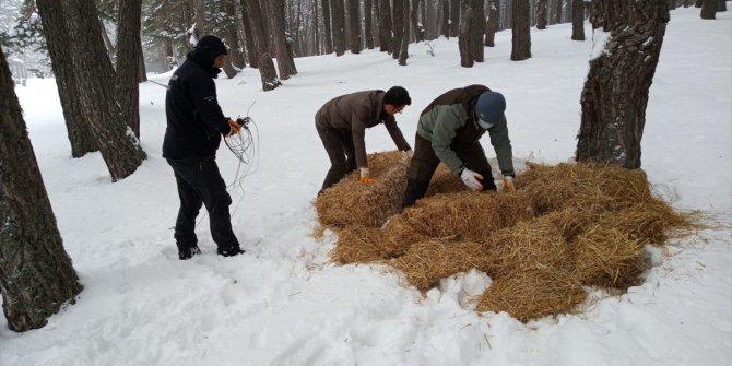 Bir metre karda yaşam mücadelesi veren yabani hayvanlara yem bırakıldı