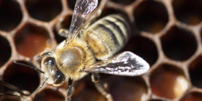 İklim değişikliği ve zirai ilaçlar arı çeşitliliğini tehdit ediyor