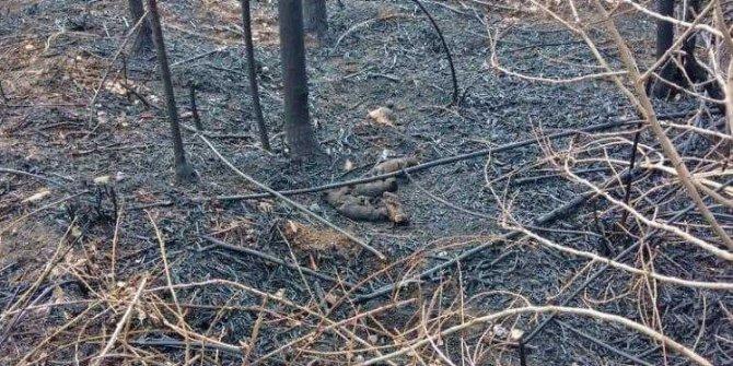 6 hayvanın telef olduğu yangında, yanan kaplumbağaya yanık kremi sürdüler