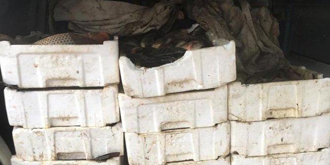 Edirne'de 800 kiloluk kaçak sazan avına 5 bin lira ceza