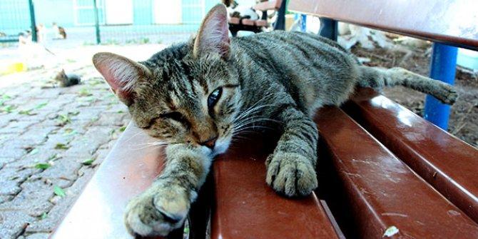 Evcil hayvanlarda obezite riski; hareket ve beslenmeye dikkat