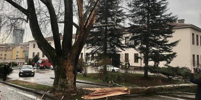 Grom udario u drvo u blizini kompleksa turskog parlamenta u Ankari