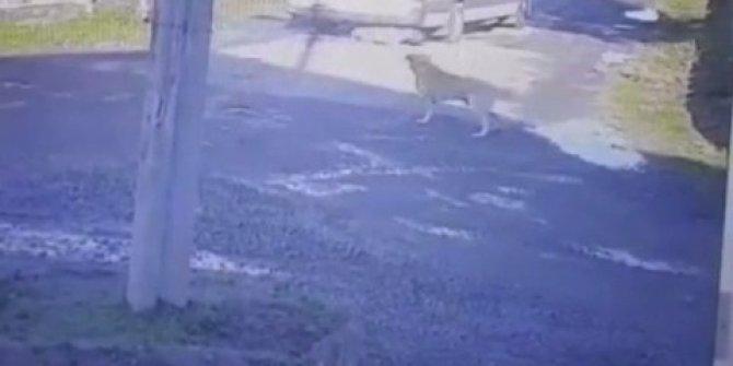 Yolda yatan köpeği üzerinden geçerek yaralayan sürücüye para cezası