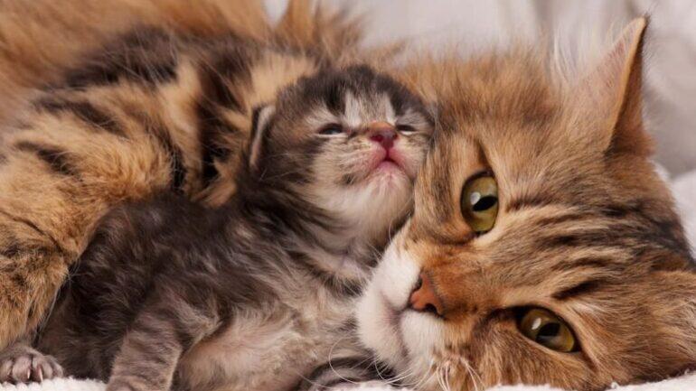 Kedinizin Bakım ve Sağlığı İçin Olmazsa Olmaz Kedi Ürünleri