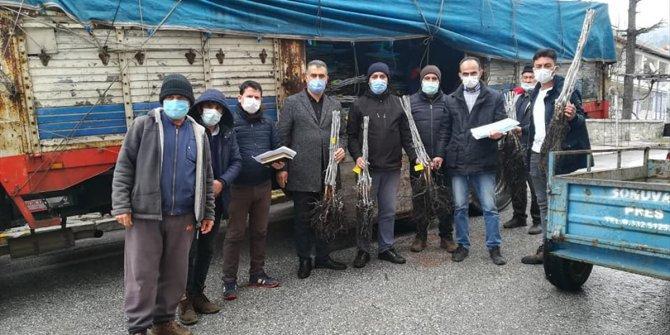 Derebucak'ta çiftçilere ceviz fidanı desteği