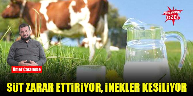 Süt zarar ettiriyor, inekler kesiliyor