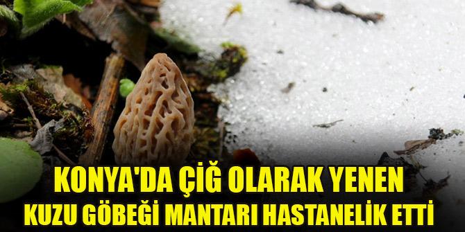 Konya'da kuzu göbeği mantarını çiğ tüketen kişi zehirlendi