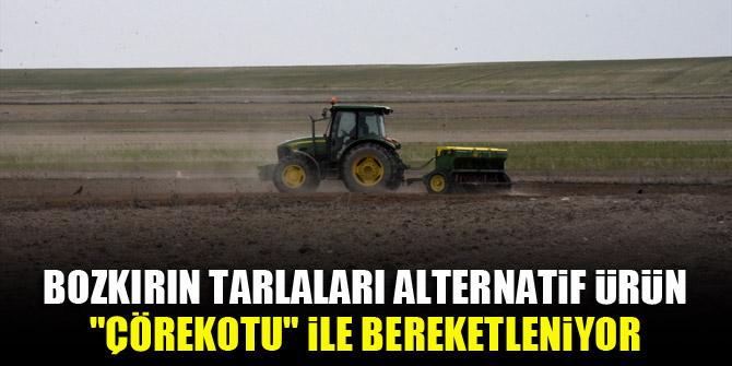 """Bozkırın tarlaları alternatif ürün """"çörekotu"""" ile bereketleniyor"""
