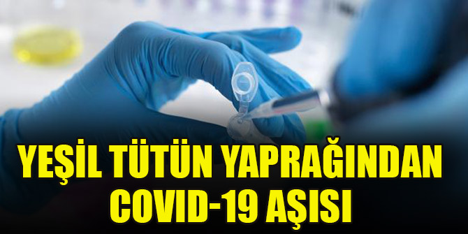 Yeşil tütün yaprağından COVID-19 aşısı
