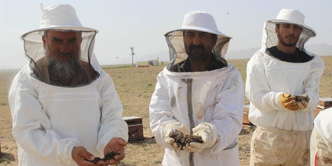 Konya'da bilinçsiz ilaçlama nedeniyle 750 kovandaki binlerce arı telef oldu
