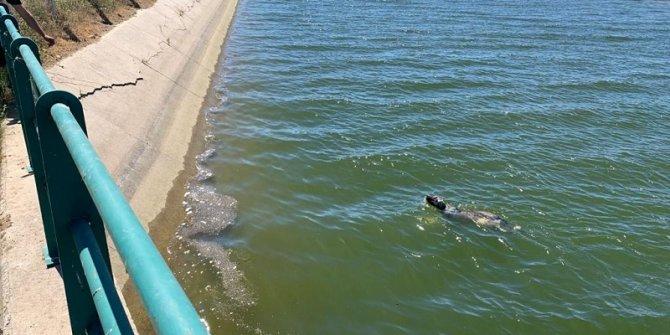 Ahırlı ilçesinde sulama kanalına düşen köpeği itfaiye kurtardı
