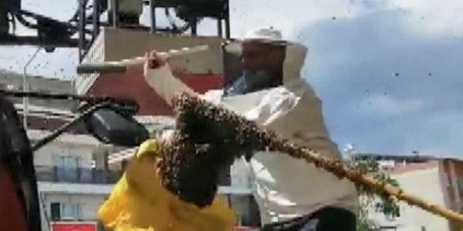 Hastanede panik: Acil servisi arılar bastı