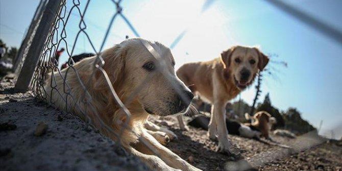 Hayvan Hakları Yasası'nda sona gelindi