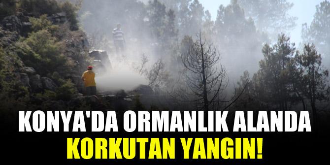 Konya'da ormanlık alanda korkutan yangın!