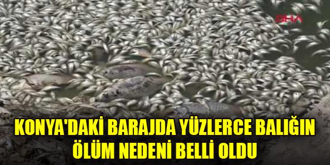 Konya'daki barajda yüzlerce balığın ölüm nedeni belli oldu