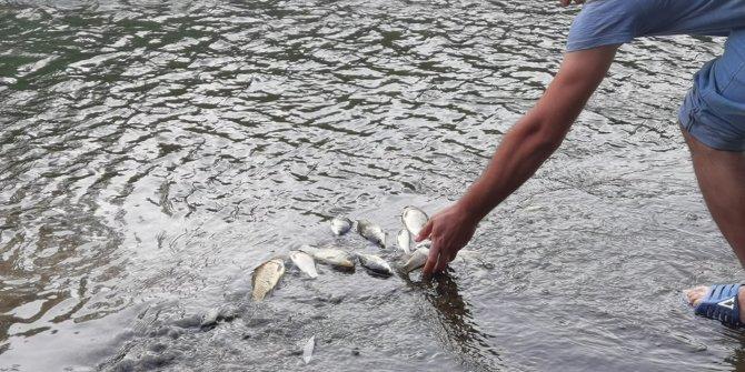 Derede balık ölümleri