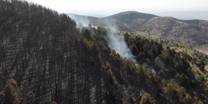 Orman yangını: 10 dönümlük alan küle döndü