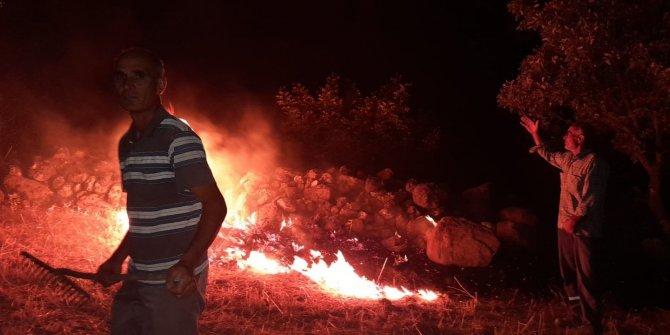 Orman yangınının ortasında kalan kaplumbağaya jandarma eli