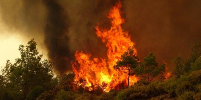 Bursa ve ilçelerinde ormanlara girmek 1 ay süreyle yasaklandı