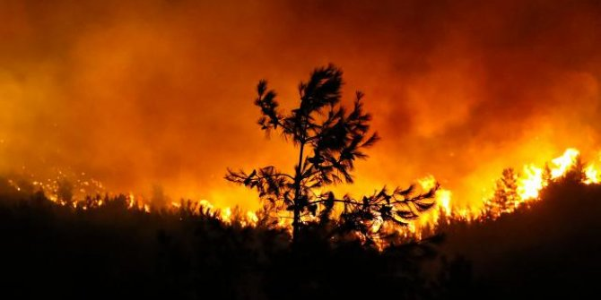 OGM: Vezirköprü'de orman yangını olduğu iddiaları asılsızdır