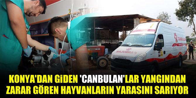 Konya'dan giden 'Canbulan'lar yangından zarar gören hayvanların yarasını sarıyor
