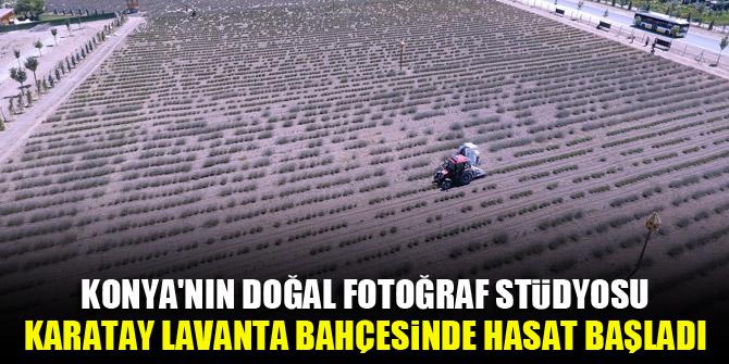 Konya'nın doğal fotoğraf stüdyosu Karatay Lavanta Bahçesinde hasat başladı