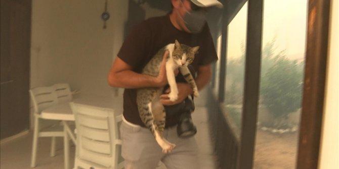 Turska: Novinari spasili mačku od požara