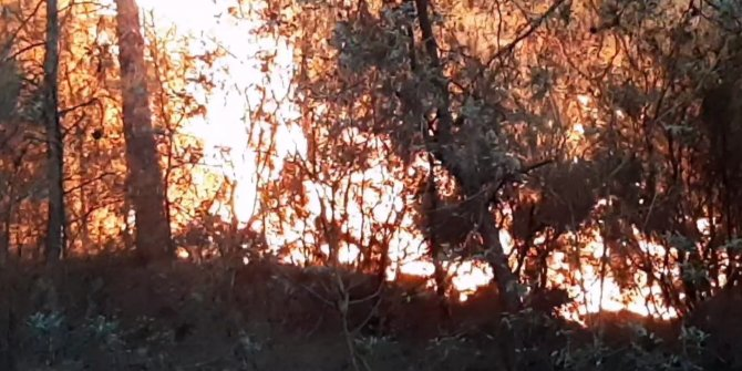 Karabük'de 10 dönüm orman yandı