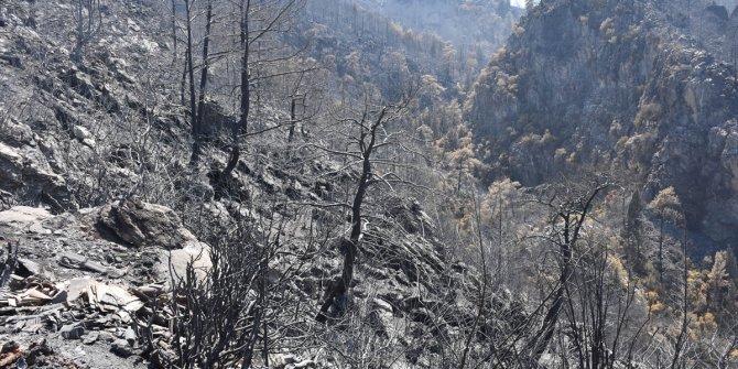 Yanan ormanlık alanların görüntüleri yaşanan tehlikenin büyüklüğünü gösteriyor