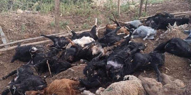 Yıldırım çarpması sonucu 30 hayvan telef oldu