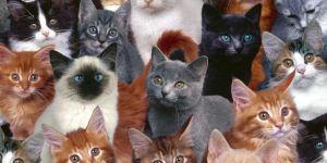 500 kedi çaldı Sebebiyse 81