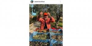 Ünlü komedyen kendi yetiştirdiği zeytinleri hasat etti