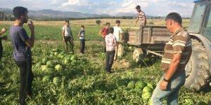 Seydişehir'de karpuz hasatına başlandı