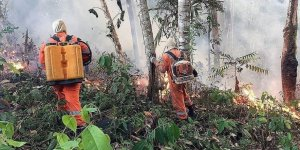 230 big investors urge firms to act on Amazon fires