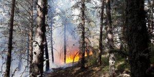 Ankara'da 10 hektar orman yandı