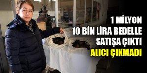 1 milyon 10 bin lira bedelle satışa çıkan mantara alıcı çıkmadı
