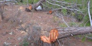 Mersin'de bin 511 ağacı izinsiz kesen kişi tutuklandı