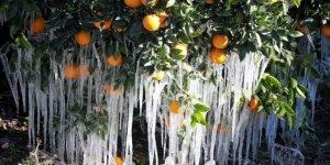 Antalya için zirai don uyarısı