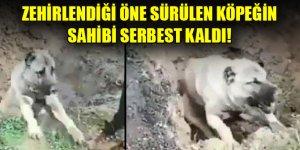 Hatay'da zehirlendiği öne sürülen köpeğin sahibi serbest kaldı